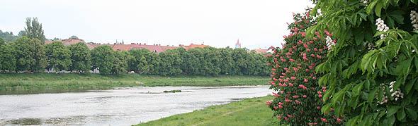 Ужгород: Каштани над Ужем