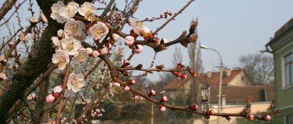 Ужгород. Квіття