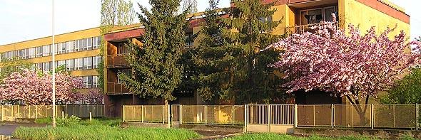 Ужгород. Сакури біля гімназії
